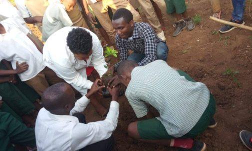 Image of many hands planting a tree at Karama School.